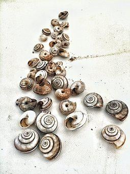 Increased, Fineart, The Composition, Shells, Snails
