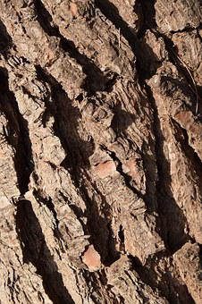 Wood, Bark, Background, Structure, Texture, Rauh, Pine