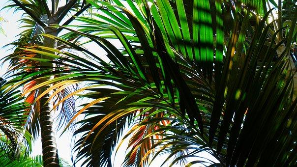 Palm Tree, Beach, Tropical, Flora, Coconut Tree, Quiet