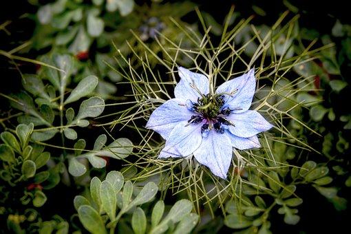 Flower, Bloom, Bulb, Floral, Botany, Spring, Petal