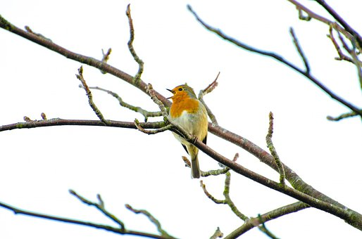 Animal, Bird, Branch, Close, Cold, Color, Cute