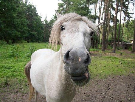 The Horse, Closeup, Animal, Horse Head, Village