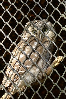 Owl, Bird, Cage, Eyes, Zoo, Bubo, Animal, Staring