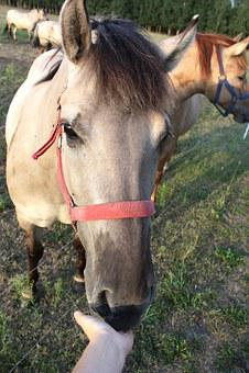 Horse Head, The Horse, Grzywa Horse, Harness Riding