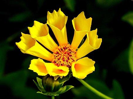 Yellow, Flower, Yellow Flower, Cone Flower, Sunshine