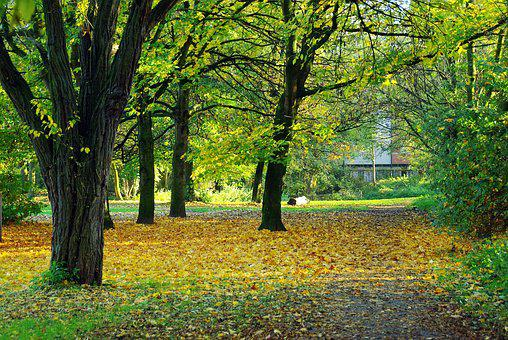 Lille, Fall, Park, Leaves, Promenade, The Gate, Allee