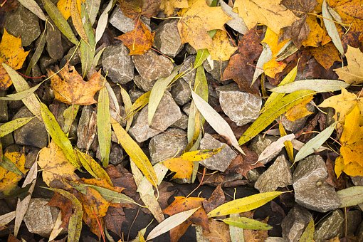 Leaves, Foliage, Stoves, Autumn, Long, Willow