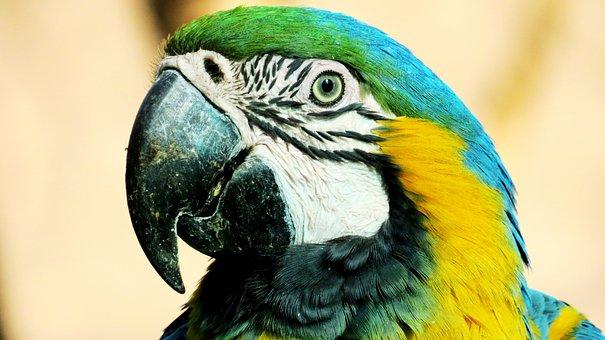 Macaw, Yellow, Ave, Peak, Animal, Animals, Nature