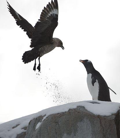 Penguin, Demonstrate, Ice, Frozen Soil
