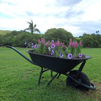 Wheel, Barrow, Old, Garden, Flowers, Broken
