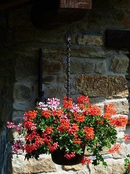 Geranium, Flowers, Slope Geranien, Plant, Red, Pink