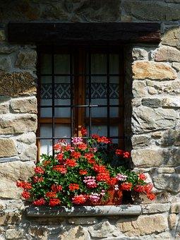 Geranium, Flowers, Plant, Red, Pink, Orange, Colorful