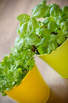 Herb, Pot, Plant, Planting, Garden, Centre, Food
