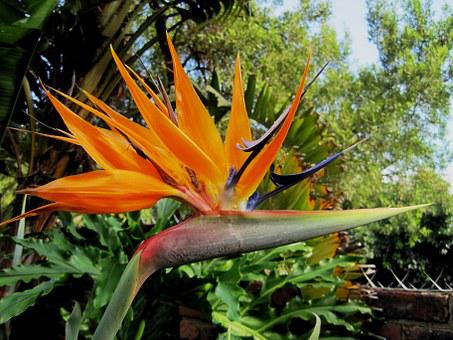 Flower, Exotic, Africa, South Africa, Indigenous