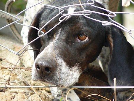 Not, Fear, Imprisoned, Gangsta, Animal, Animal Welfare