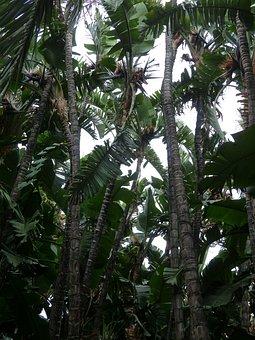 White Caudata, Caudata Forest, Forest, Palm Tree Forest