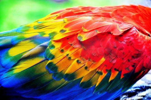 Pen, Parrot, Colors, Color, Ara, Wings, Detail Of