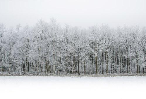 White, Snow, Forest, Winter, Cold, Ice, Nature, Season