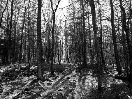 Black And White, Woodland, Forest, Shadows, Winter