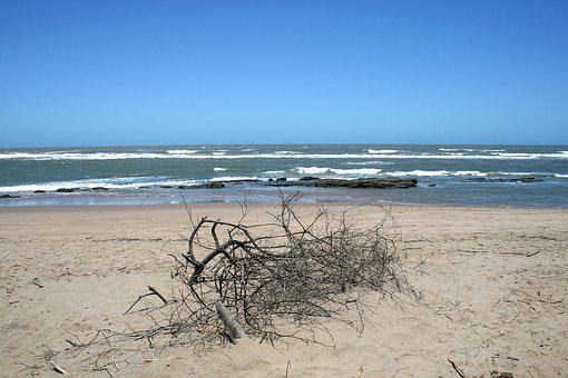 Deadwood On Beach, Sea, Ocean, Beach, Sand, Brush