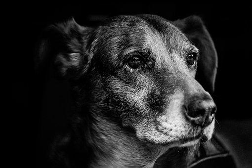Dog, Portrait, Snout, Fur, Nose, Bart, S W, Hybrid