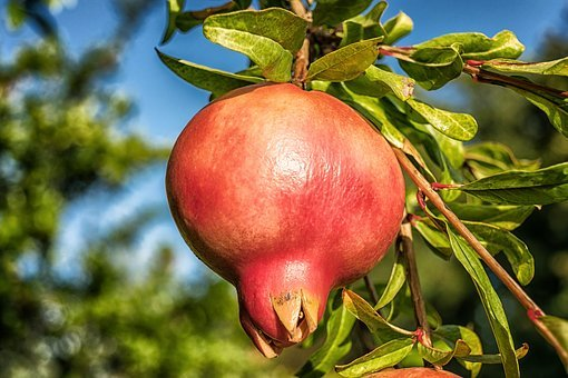 Pomegranate, Fruit, Punica Granatum, Vitamins, Exotic