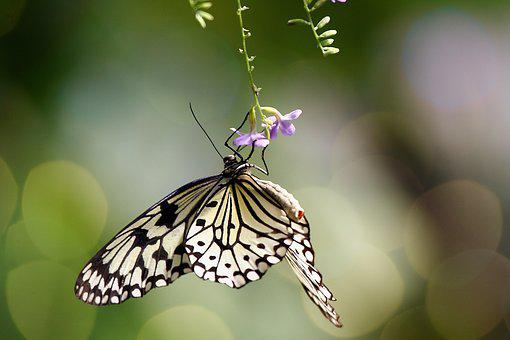 Butterfly, Tropical, Flower, Insect, Patterns, Macro