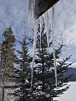 Winter, Scenery, Trees, Icicles, Cold, Snow, Landscape