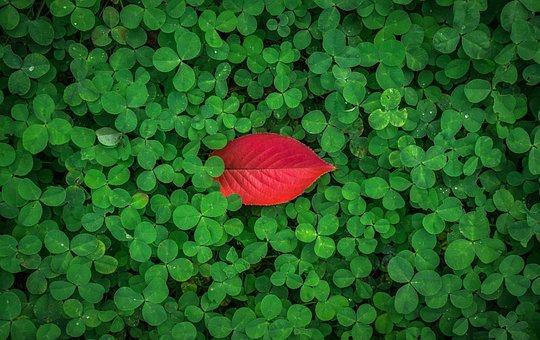 Leaves, Autumn Leaves, Autumn, Herb, Shamrock, Clover