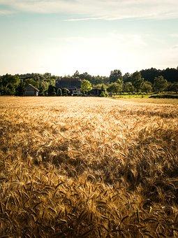 Village, Corn, Landscape, Poland Village, Harvest