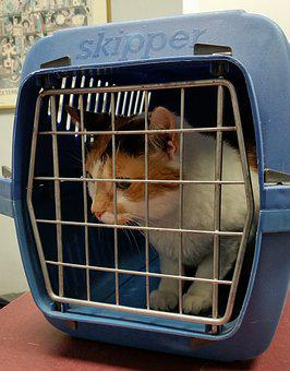 Cat, Carrier, Animal, Pet, Feline, Box, Cage, Domestic