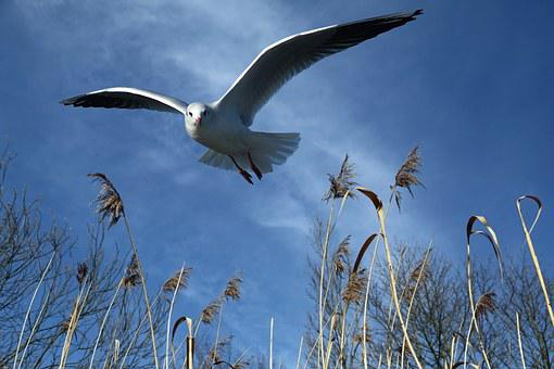 Seagull, Fly, Bird, Wing, Freedom, Locomotion, Feather