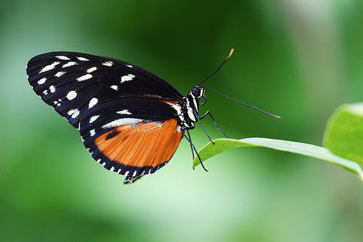 Butterfly, Insect, Garden, Wings, Nature, Macro