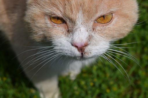 Cat, View, Close, Domestic Cat, Nature, Head, Watch
