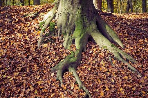 Autumn, Nature, Landscape, Forest, Farbenspiel, Leaves