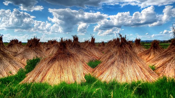 Reed, Landscape, Heap, Waterfront, Lakeside