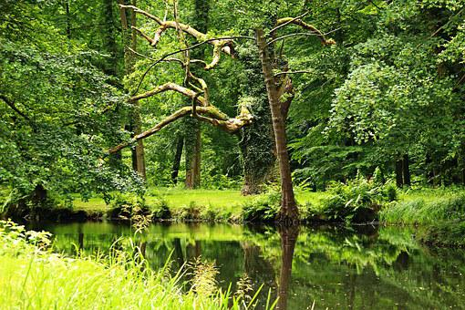 Forest, Pond, Lake, Waldsee, Waters, Water, Trees, Bank