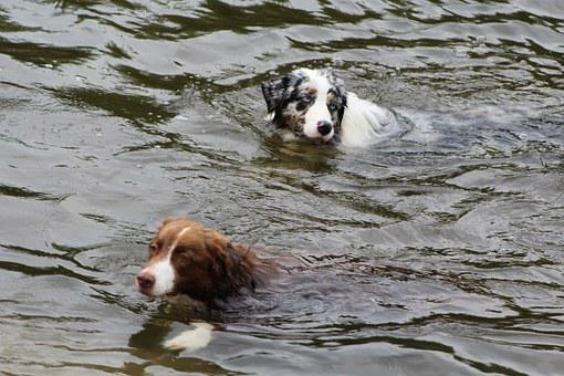 Dogs, Dog In The Water, Swim, Play, Sport, Sporty