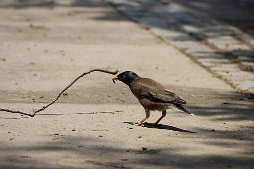 Bird, Food, Chandigarh, Natural, Wildlife, Meal, Nature