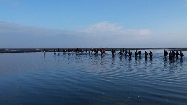 Wadlopen, Hiking, Walk, Nature, Sea, Wadden Sea, Water