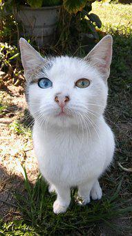 Cat, Animals, Cats, Different Eye Color, Pet