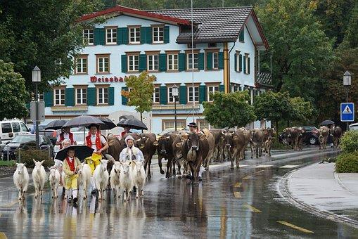 Switzerland, Appenzell, Typical, Tradition, Désalpe