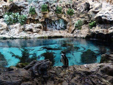 Penguin, Wait, Zoo, Enclosure, Water, Penguin Pool