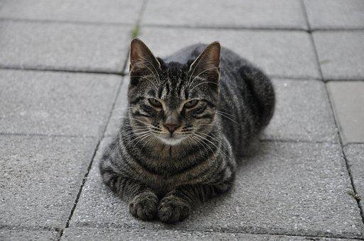 Cat, Gray, Cute, Animal, Losing His Home, Gray Fur