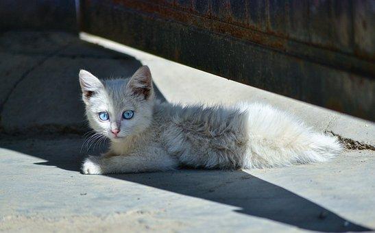 Animal, Cat, Cute, Losing His Home