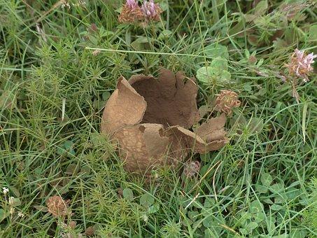 Bovist, Mushroom, Mushroom Dust, Ripe, Rabbits Umbrinum