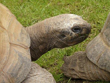 Turtle, Terrestrial Vertebrates, Amniota, Sauropsida