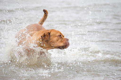 Wildlife Photography, Pet Photography, Dog, Water