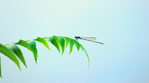 Dragonfly, Insect, Wings, Leaf, Small, Bugs, Color