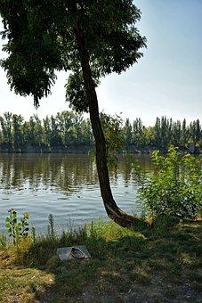 Vltava, Tree, Peace, Rest, Anchorage, River